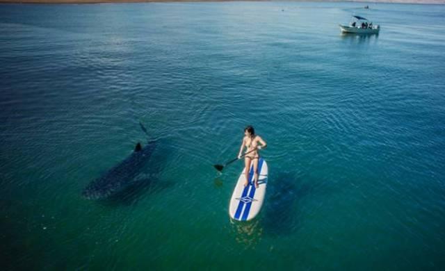 shark-board-2-670