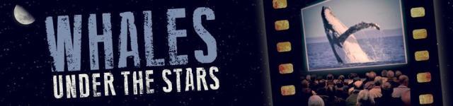 MWF_Whale_Under_The_Stars_Header_0115